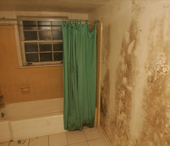 Extensive Mold Damage - Campbell, CA