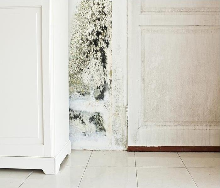 Mold Remediation Our Complete Guide To Mold Damage Remediation In Campbell