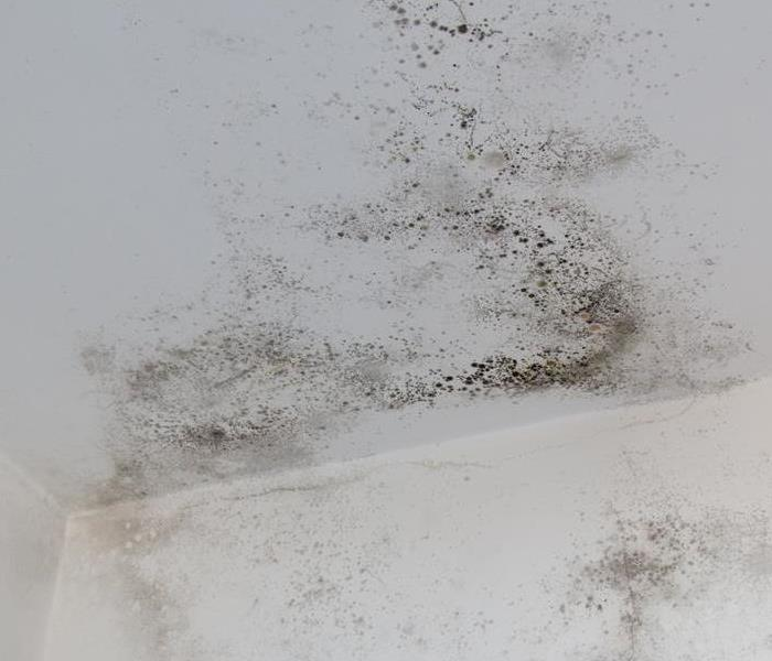 Mold on the ceiling and wall.